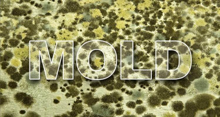 A Look At Just How Fast Mold Grows